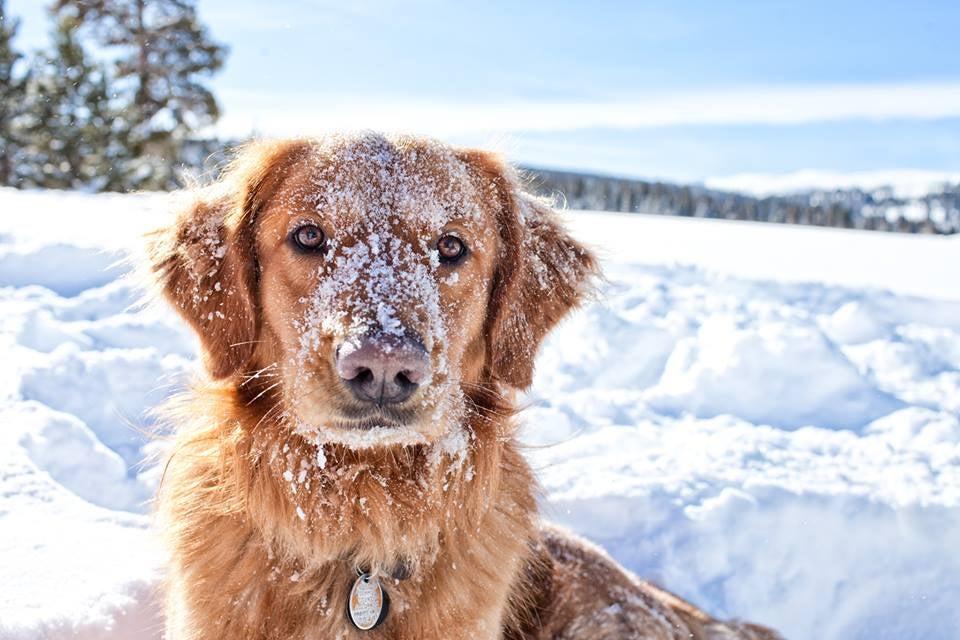 Top 10 Powder Hounds – Best In Snow
