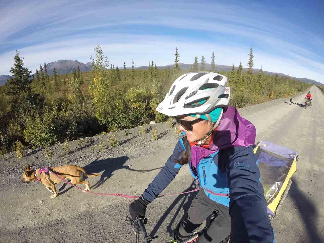 More Than A Bike Tour: Towing Dogs On Alaska's Dalton Highway