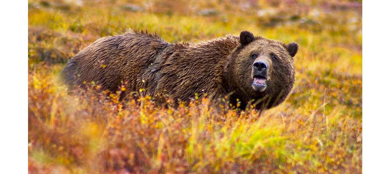 Rethinking Attitudes Toward Bears After A Fatal Attack