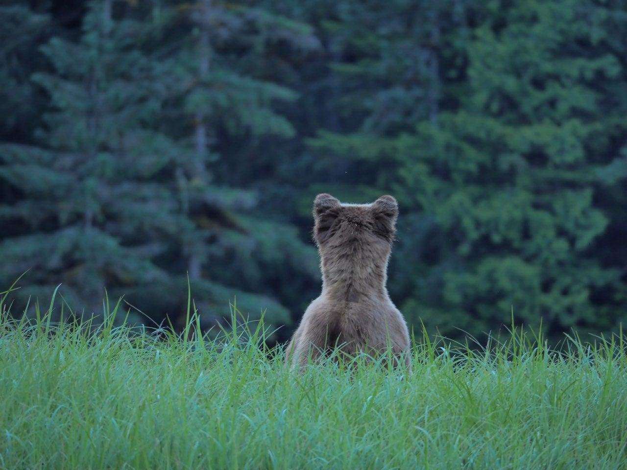 Close Encounters Of The Ursine Kind
