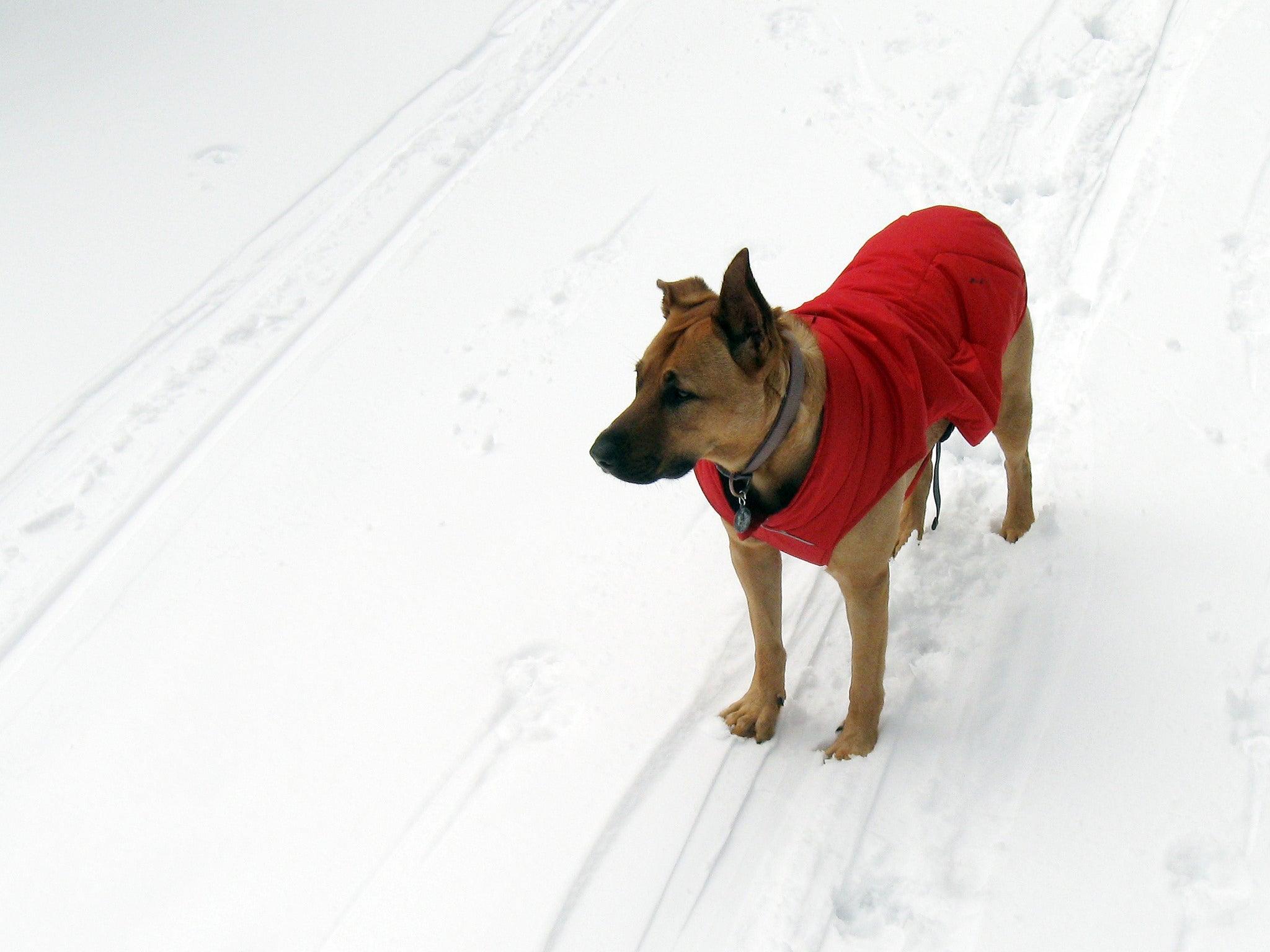 Top 10 Dogs In Winter Gear - Best In Snow